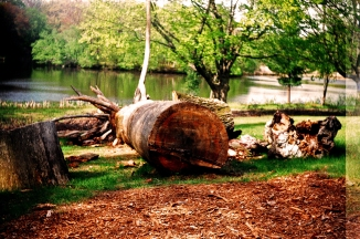 Insane Sharpness- Argus C3 MatchMatic, 50mm f/3.5 Cintar, Fujicolor 200 Film, Log At Institute Park, Worcester, MA