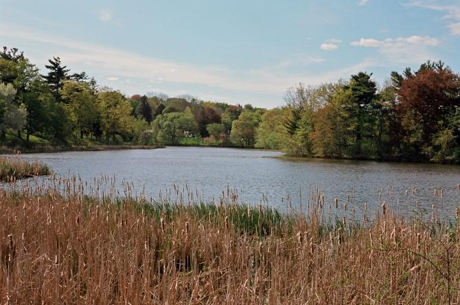 Institute Park, Worcester, MA Nikon FE-2, Nikkor 50mm 1.8 Ai, Kodak Ektar