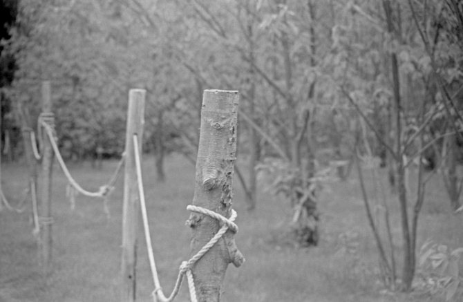 Scary No More- From My 1st Roll Of Home Developed Film- Moore State Park, Paxton, MA Kodak TriX, D76, Argus C3, 100mm Tele-Sandmar