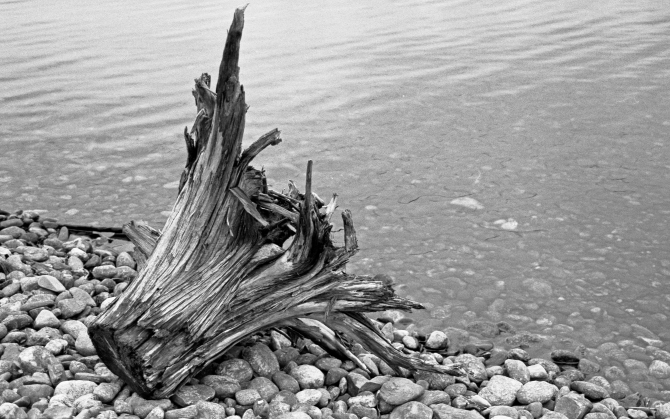 6/12/11 Wachusett Reservoir, West Boylston, MA - Tri-X, Of Course.