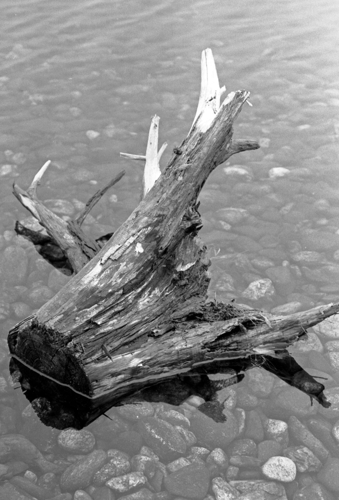400 Speed B&W Film Continues To Mesmerize- A Stump Afloat
