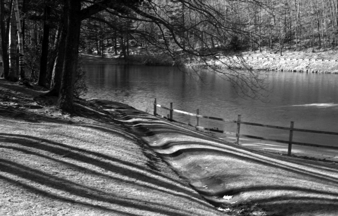 The Plastic Fantastic- Leominster State Forest, Massachusetts- Canon 50mm f/1.8, Rebel G, Hoya Red Filter, The Late Kodak Plus-X, HC-110 49:1, +20% Dev. Time For Contrast
