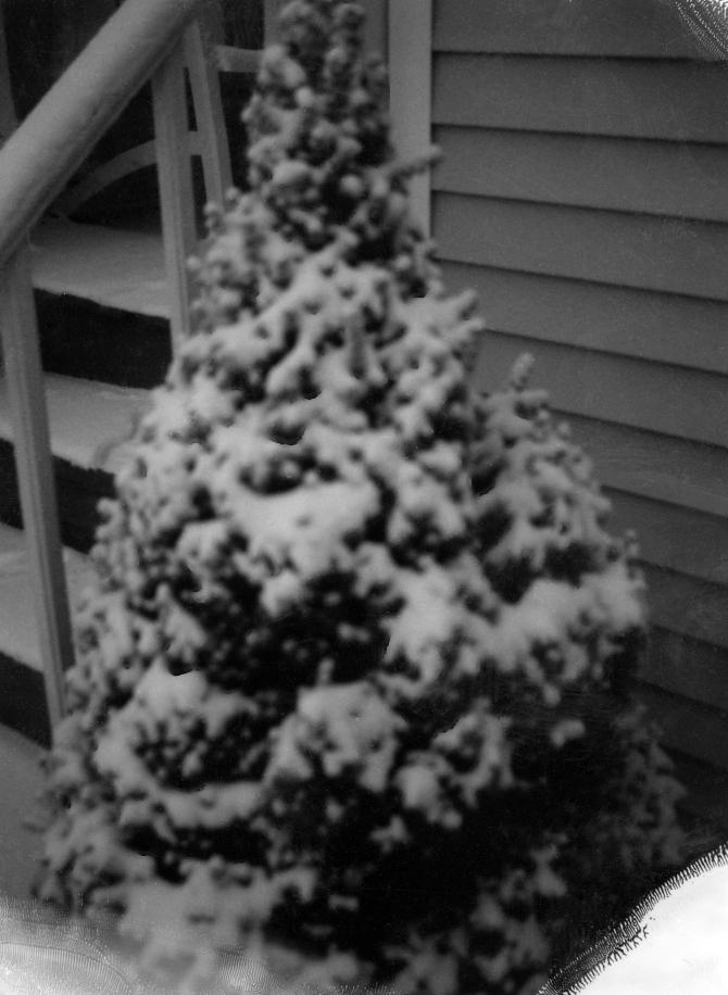 Tree Nemo 2 8 13 Polaroid 450 Fuji 100B