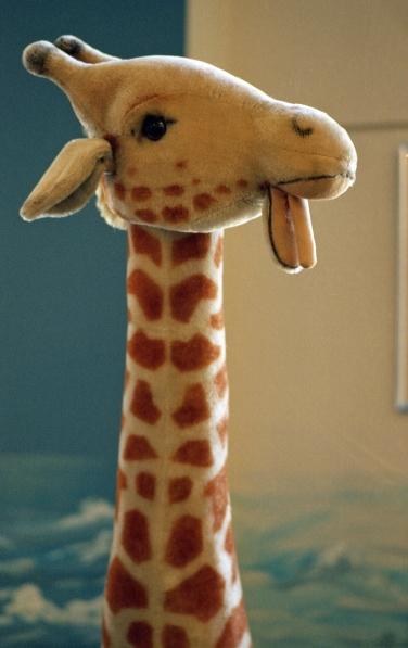 Giraffe In Worcester Public Library Canon AE1 Portra 400 135mm f2.8 FD Kodak Portra 400 Shot At 1600
