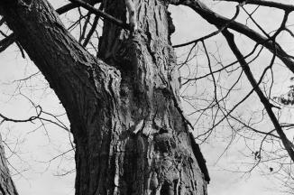 From Last November, Elm Park, Kodak 400 BW CN film (now extinct).