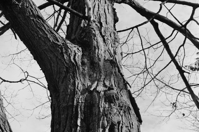 From Last November, Elm Park, Kodak 400 BW CN film (now extinct).